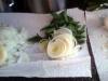 garlic onion leek